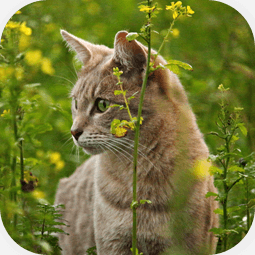 feline fine focus