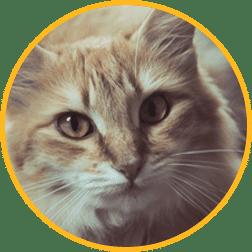 let's talk kitties