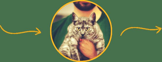 meet your pet's doctor