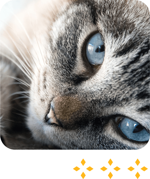 useful cat tips and trusted websites