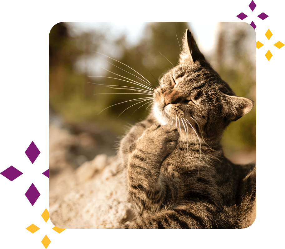 Medical Care From Kittenhood and Beyond