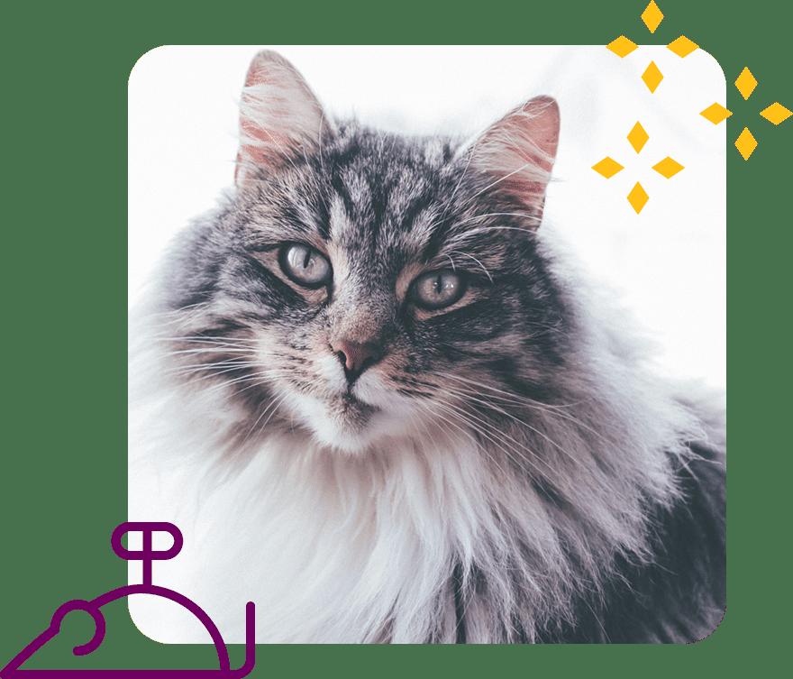 Modern, personalized, low-stress feline veterinary care in beautiful Bend, Oregon