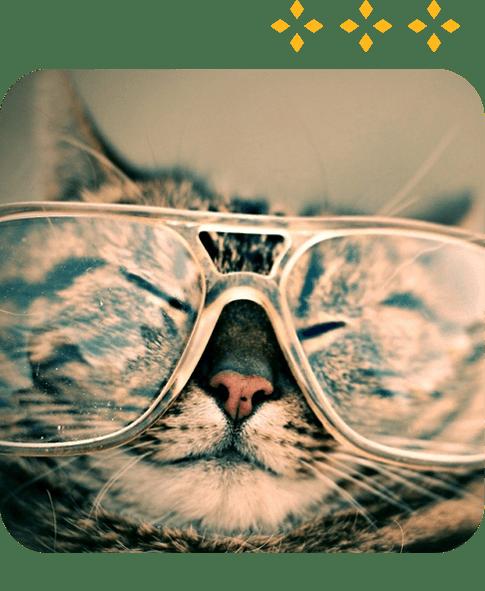 Team Member of Feline Fine Cat Clinic